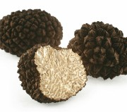 Truffles isolated on white. Truffles are valuable subterranean ascomycetous fungi. They have strong odor and are used sparingly. Truffles are supposed to have aphrodisiacal powers. They can be found with pigs or specially trained dogs.